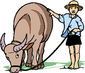 animated-buffalo-image-0009