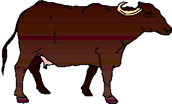 animated-buffalo-image-0020