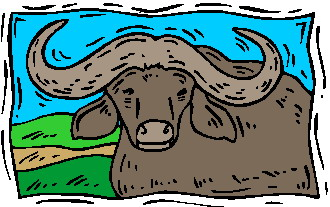 animated-buffalo-image-0023