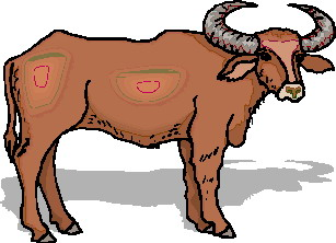 animated-buffalo-image-0041