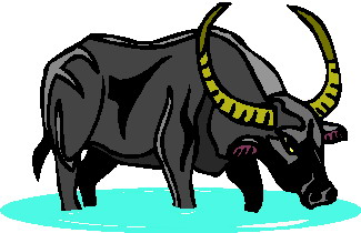 animated-buffalo-image-0051