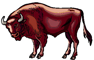 animated-buffalo-image-0057