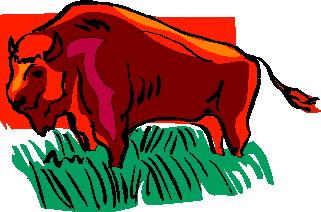 animated-buffalo-image-0066
