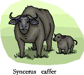 animated-buffalo-image-0067