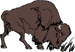 animated-buffalo-image-0071