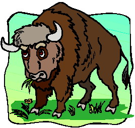 animated-buffalo-image-0072