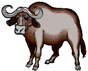 animated-buffalo-image-0077