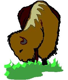animated-buffalo-image-0084