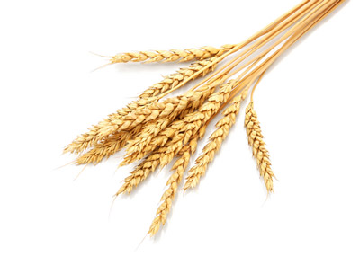 animated-grain-image-0007