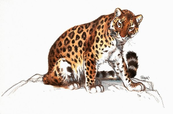 animated-leopard-image-0017