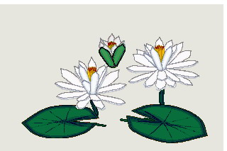 animated-water-lily-image-0008