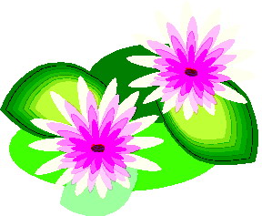 animated-water-lily-image-0012