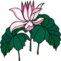 animated-water-lily-image-0018