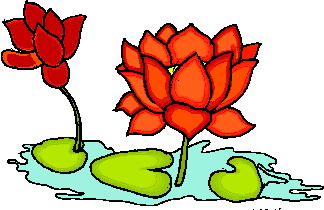 animated-water-lily-image-0022
