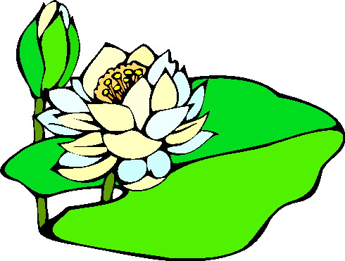 animated-water-lily-image-0024