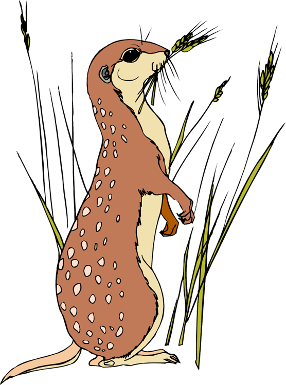 animated-meerkat-image-0009