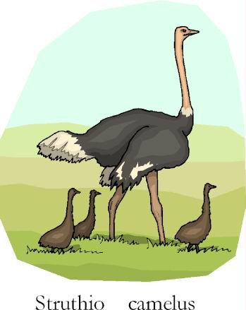 animated-ostrich-image-0012