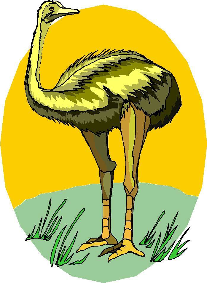 animated-ostrich-image-0035