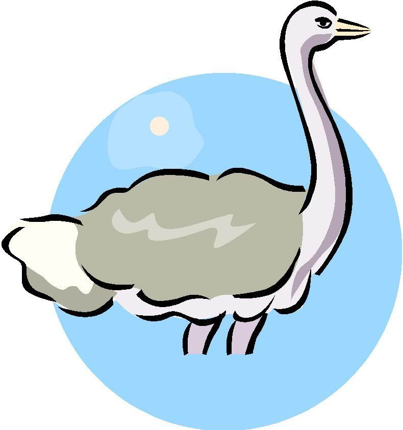 animated-ostrich-image-0055