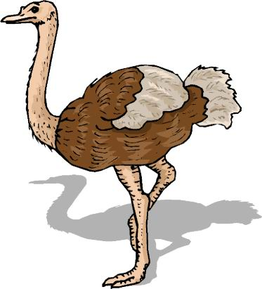 animated-ostrich-image-0058