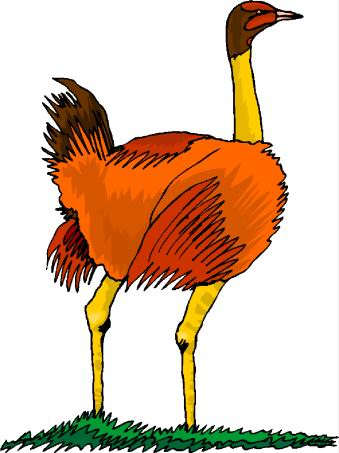 animated-ostrich-image-0060