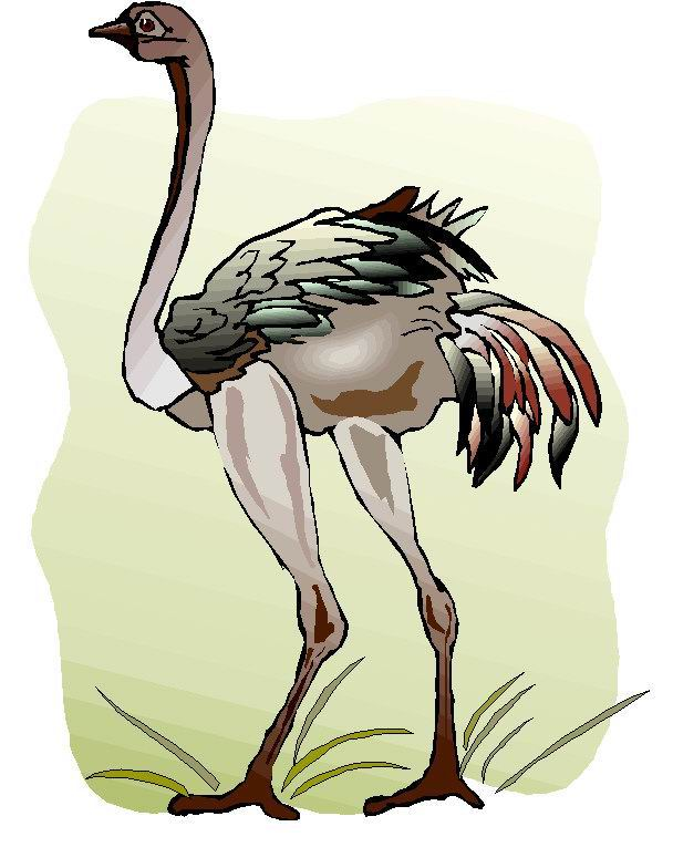 animated-ostrich-image-0063