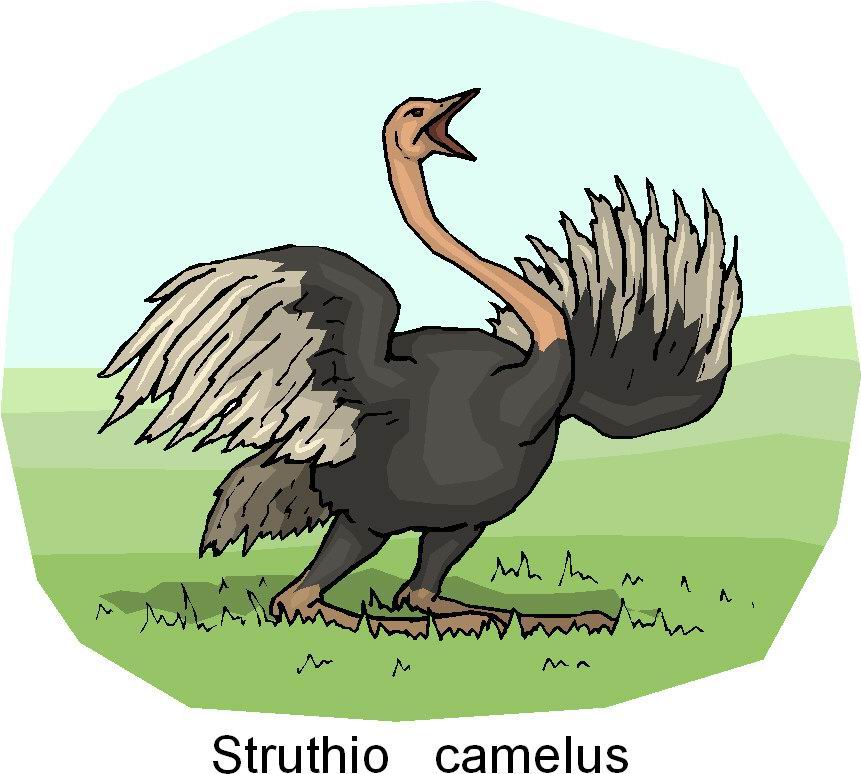 animated-ostrich-image-0081