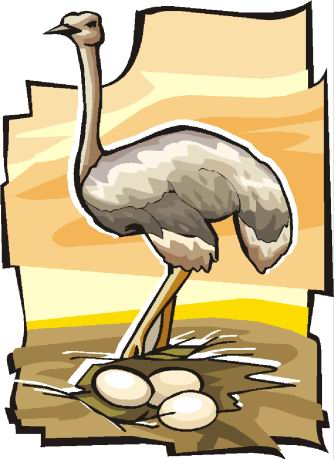 animated-ostrich-image-0090