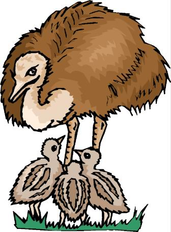 animated-ostrich-image-0092