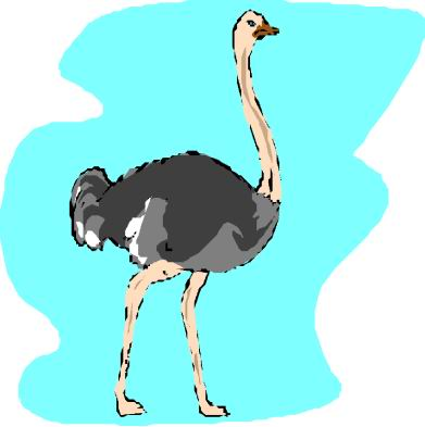 animated-ostrich-image-0094
