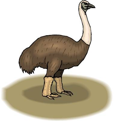 animated-ostrich-image-0106
