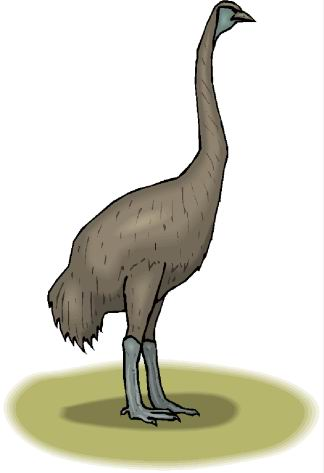 animated-ostrich-image-0108