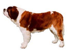 animated-st-bernard-image-0060