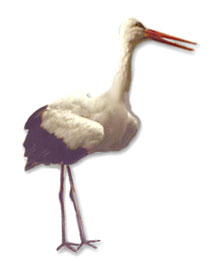 animated-stork-image-0030
