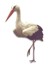 animated-stork-image-0038
