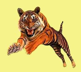 animated-tiger-image-0021