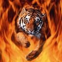 animated-tiger-image-0043