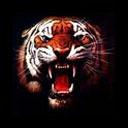animated-tiger-image-0059