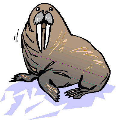 animated-walrus-image-0011