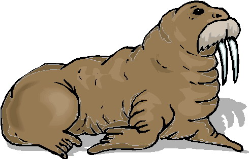 animated-walrus-image-0016
