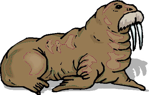 animated-walrus-image-0024