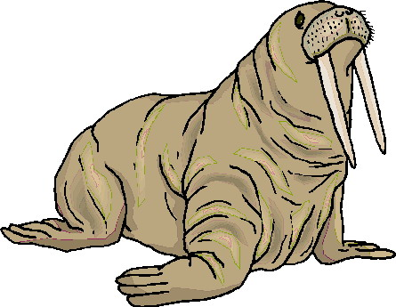 animated-walrus-image-0032