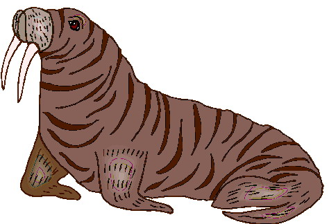 animated-walrus-image-0035