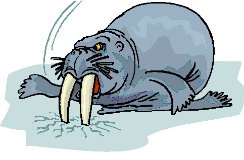 animated-walrus-image-0038