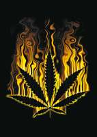 animated-weed-image-0007