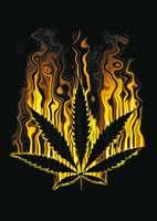 animated-weed-image-0007