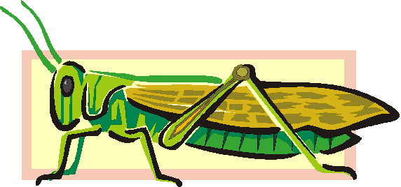 animated-grasshopper-image-0006