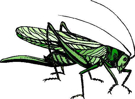 animated-grasshopper-image-0010
