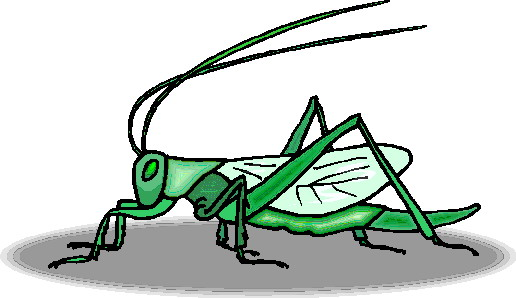 animated-grasshopper-image-0011