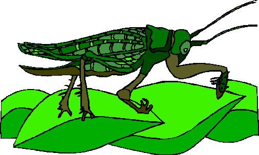 animated-grasshopper-image-0014